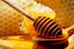 Cirò Marina, produzione di miele ai minimi storici: apicoltori preoccupati