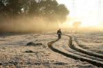 Fao, arriva l'app contro insetto killer del mais in Africa
