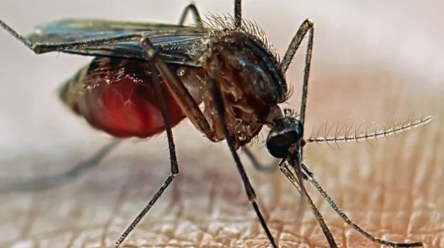 cambiamento climatico, malaria, malattie in Europa, Salute e Benessere