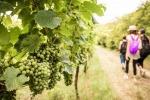 Mangialonga Picena, degustazioni a passeggio tra vigne Offida