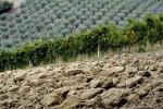 Voucher: Centinaio, torna un po' di legalità in agricoltura