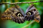 Le ali delle farfalle si sono evolute per opera di un gene 'pittore' (fonte: Edwin Dalorzo, Flickr)