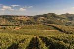 Coldiretti, produzione vino cresce tra il 10% e 20%
