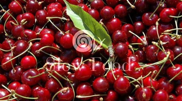 ciliege, ciliegia di maggio, crea, maltempo, stagione delle ciliegie, Daniela Giovannini, Terra e Gusto