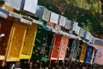 Un alveare hi-tech controlla la salute delle api (fonte: HIVETECH)