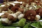 Boom di funghi in tutta Italia, dopo +92% piogge in agosto