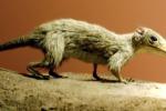 I primi mammiferi avevano l'aspetto di piccoli roditori (fonte: Museo di Storia Naturale di Londra)