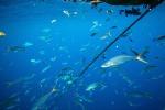 Un portale europeo per valorizzazione le rotte del tonno rosso del Mediterraneo