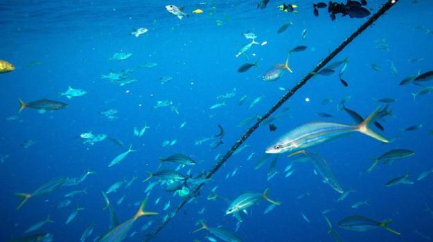 food, mediterraneo, tonno, turismo, Viaggi