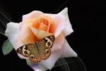 Il calore è usato dai fiori per attirare gli insetti (fonte: maxpixel.freegreatpicture.com)