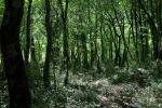 Reggio, dalla Regione 500 mila euro per il patrimonio boschivo