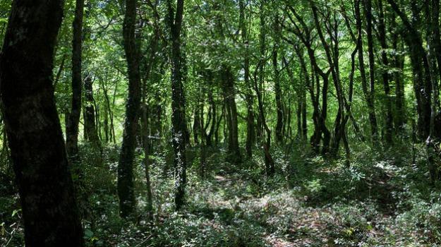 bosco reggio calabria, finanziamento bosco reggio, psr calabria, Giovanni Muraca, Reggio, Calabria, Economia