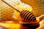 Il miele per controllare l'ambiente, scopre anche le frodi