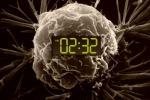 La nuova scommessa della lotta ai tumori è riuscire a riprogrammare l'orologio biologico delle cellule malate (fonte: National Cancer Institute, Christine Daniloff/MIT)