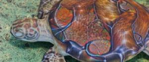 """Il Centro tartarughe di Brancaleone è a rischio """"sfratto"""""""
