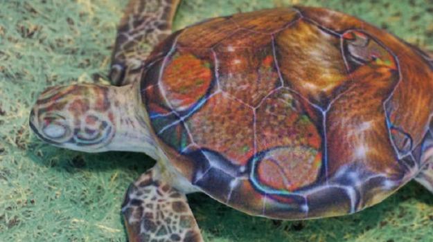Centro tartarughe Brancaleone, sfratto centro tartarughe, tartarughe Brancaleone, Mario Oliverio, Reggio, Calabria, Politica