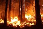 Gli incendi boschivi minacciano gusto e aroma dei vini prodotti nelle vicinanze (fonte: Pixabay)