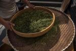 Alzheimer, cavie come sane con composti da tè verde e carote