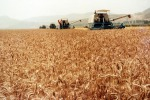 Agricoltura: Italia, a rischio 550 mln di aiuti Ue