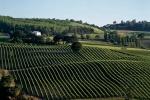 Vino: Coldiretti Marche, +20% produzione vendemmia 2018