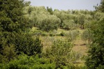 Fascia olivi Assisi-Spoleto entra a far parte Patrimonio Fao