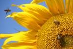 """San Ferdinando, un progetto per eliminare il """"killer delle api"""""""