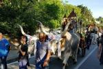 Larino, 130 carri per Festa San Pardo