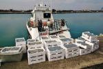 Reggio Calabria, pandemia e lockdown non fermano la Guardia Costiera