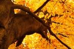 Il 22 settembre scatta l'equinozio d'autunno, addio all'estate