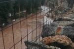 Maltempo: Coldiretti e Cia Puglia, danni alla vendemmia