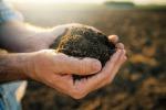 Truffa sui fondi Ue in agricoltura nel Trapanese, contratti stipulati anche con i morti