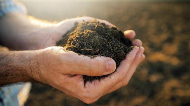 agricoltura, arcea, calabria, Calabria, Economia
