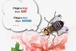 Il fiuto dei moscerini ispira i motori di ricerca del futuro (fonte: Salk Institute)