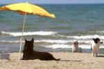 A Rimini i cani possono fare il bagno