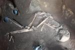 Tomba dell'atleta e corredo funerario. Epoca repubblicana, rinvenuta in localit Case Rosse a Roma