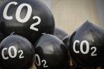 """Alberi """"extralarge"""" entro il 2100 per effetto della CO2"""