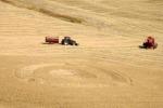 Grano: Coldiretti, bruciato dal caldo 10% raccolto in Europa