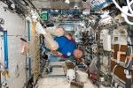 Paolo Nespoli alle prese con gli ultimi esperimenti prima del rientro a Terra (fonte: Paolo Nespoli, ESA, NASA)