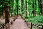 Dal Psr 2014-2020 nove milioni di euro a sostegno della forestazione in Calabria