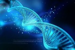 Sono 80 i geni che regolano la durata del sonno nel moscerino della frutta (foto Nogas1974/Wikimedia Commons)