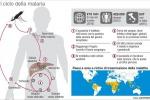 Malaria presa in ospedale, come Sofia altri 5 casi in Europa