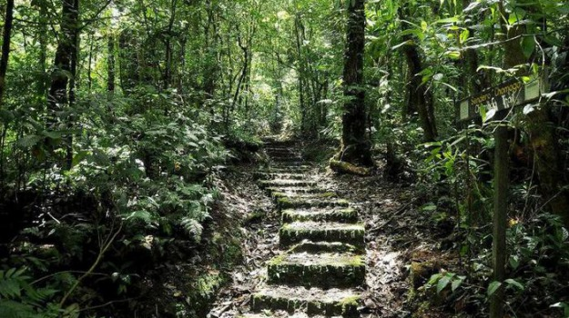 foreste, sindacati, Calabria, Economia