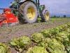 Nuovi bandi e corsi on line per rilanciare il comparto agricolo in Calabria