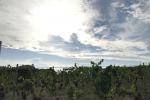 Vino: progetto per valorizzare Igt Palizzi