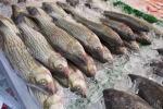 Coldiretti, parte fermo pesca in Adriatico,stop pesce fresco