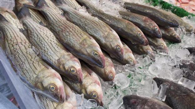 bando centro ittico, bando gestione centro ittico, centro ittico, centro ittico cetraro, Angelo Aita, Cosenza, Calabria, Economia