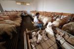 Vita da pastori con Experience Airbnb
