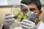 Focolaio Salmonella in Ue, 147 casi causati da cibi pronti