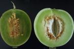 Da rifiuti vegetali a materiali utili, grazie a un enzima