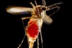 Via libera negli Stati Uniti alle zanzare 'killer' contro il virus Zika